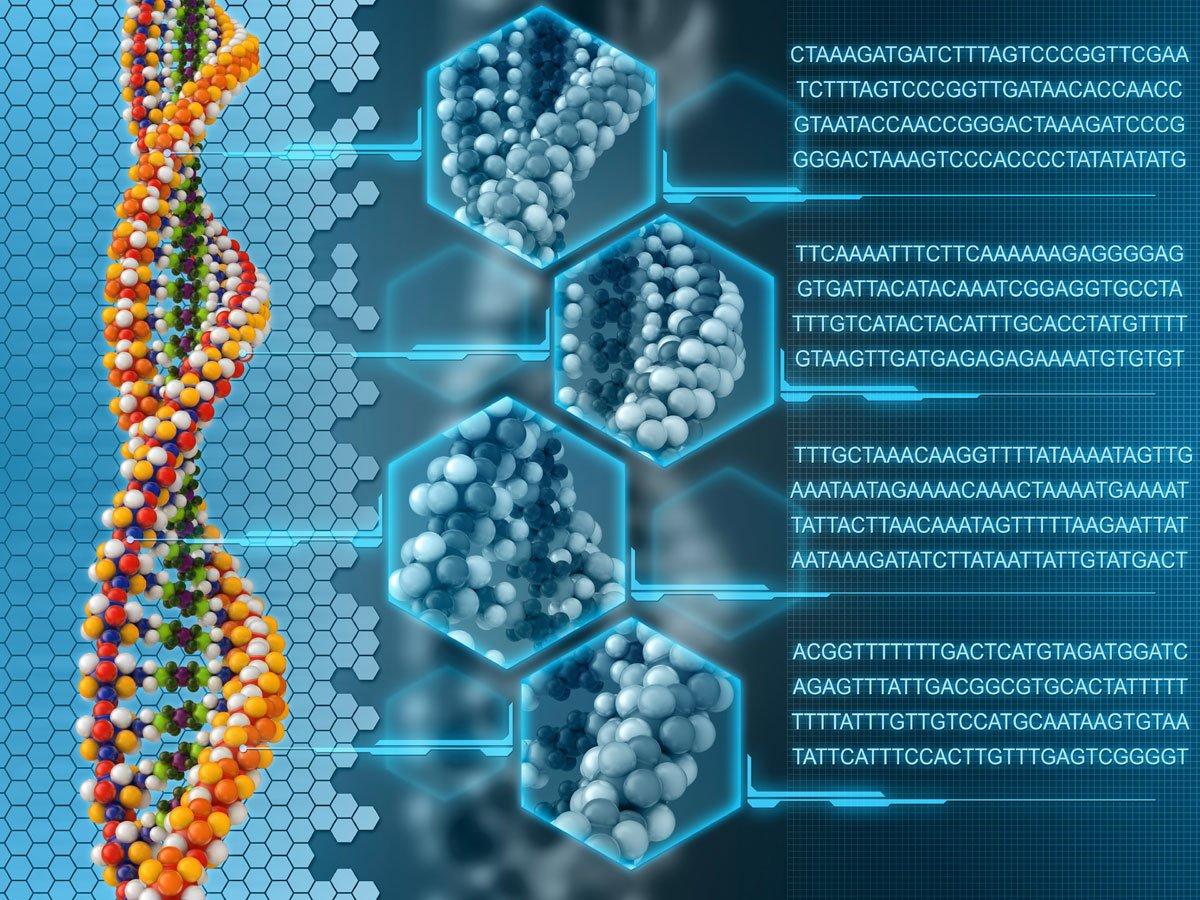 ljudski genom
