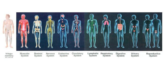kako nastaje rak sistemski nivo