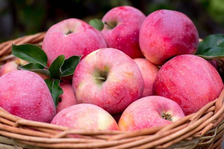 Rutin in Äpfeln