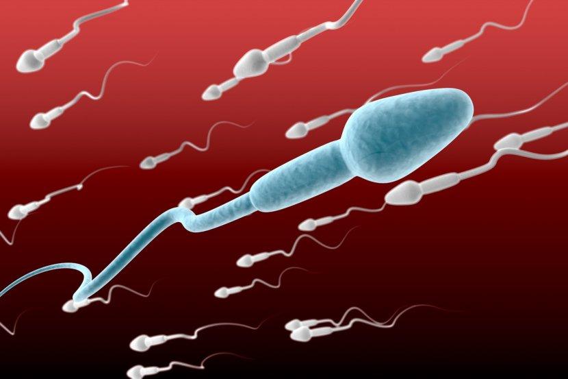 spermatozoidi i neplodnost