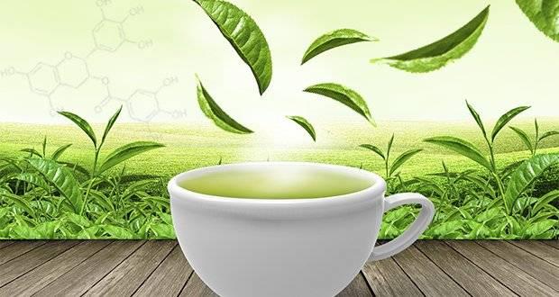 grüner Tee als Heilmittel gegen Krebs
