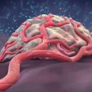 Angiogeneza