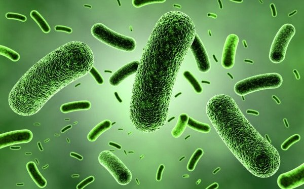 Chlorophyllflüssigkeit unter dem Mikroskop
