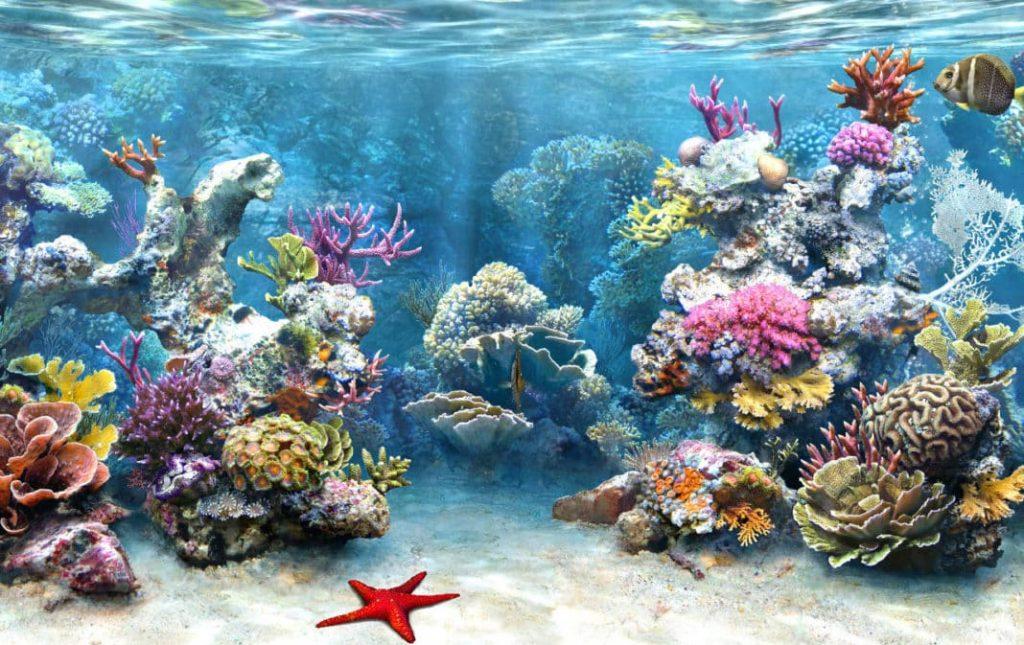 koralni kalcijum slika