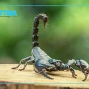 vidatox scorpion venom