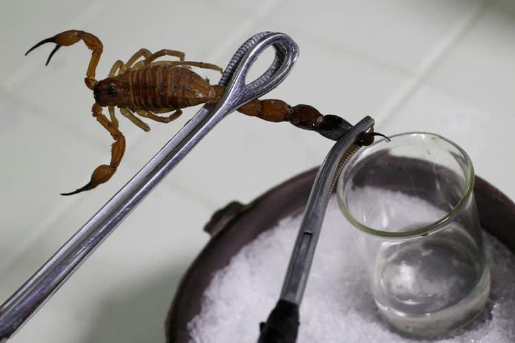 sakupljanje otrova skorpiona