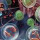 autophagy diet image