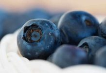 borovnice i zdravlje