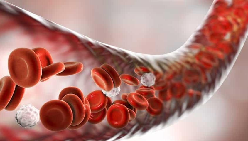anemija malokrvnost slika