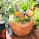 lekovite biljke koje vam pomažu