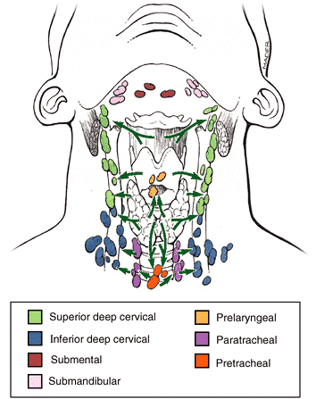 Lymphatic drainage of the thyroid gland