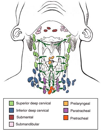 Limfna drenaža tiroidne žlijezde