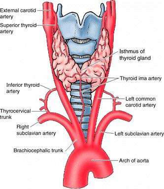 arterija u grlu