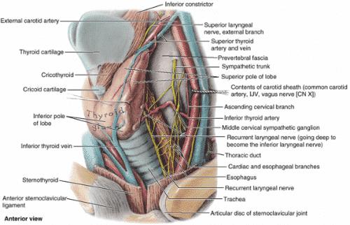 vene tiroidne žlezde