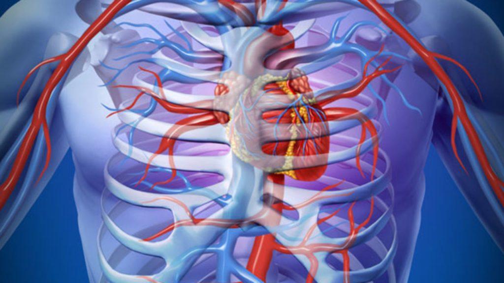 aorta hipertónia elecampane és magas vérnyomás