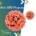 анти-HPV програма (1)