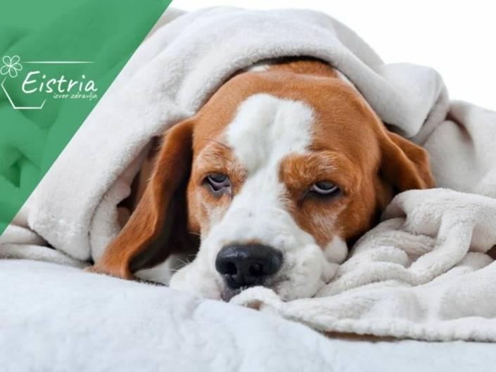 dijeta za psa sa rakom