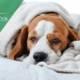диета за куче с рак