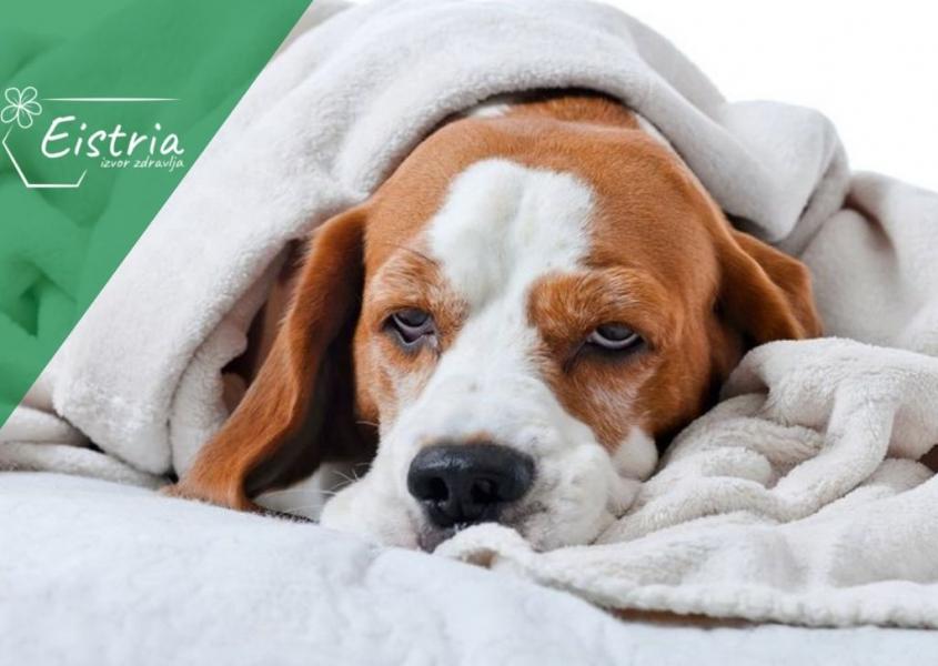 dijeta za psa s rakom